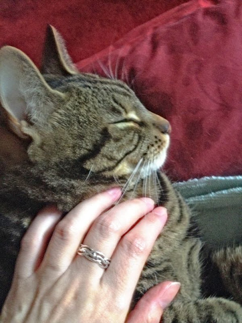 tabby cat and human hand giving Reiki healing