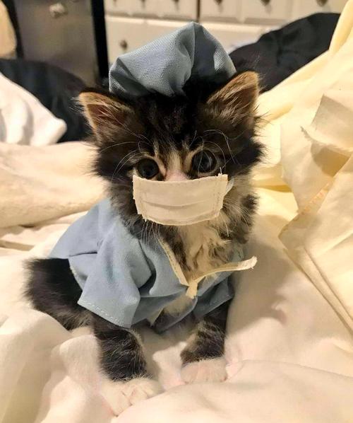 Cute kitten wearing face mask Anti-COVID-19
