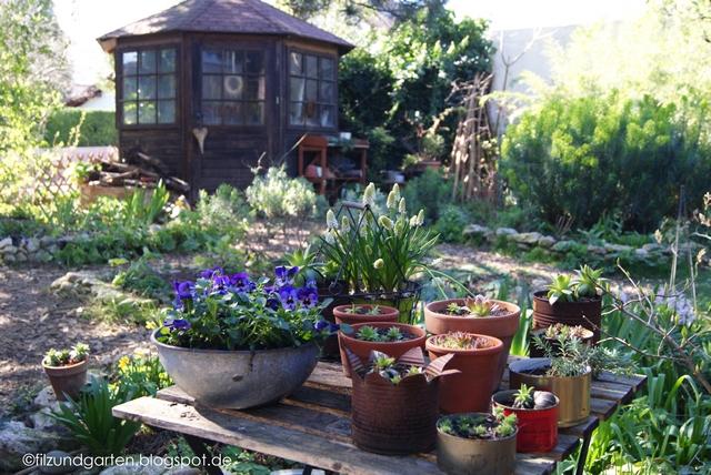 Gartentisch mit Hornveilchen, Muscari und Semperviven