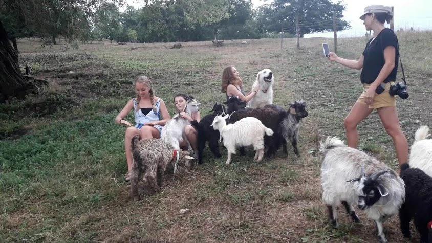 cashmere goats, tuscany, italy