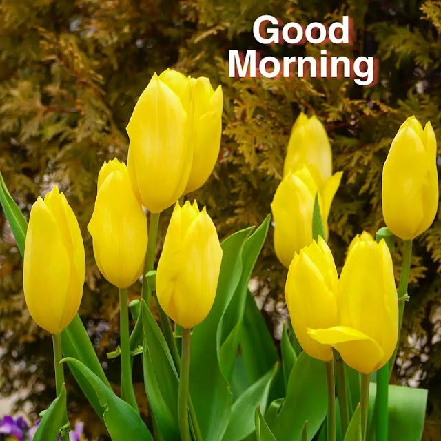 good morning 3d images with flowers hd