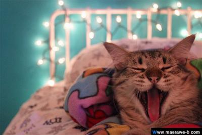 صور صور قطط كيوت 2020 خلفيات قطط جميلة جدا cats22.png