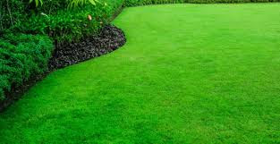 Canada green grass pros and cons