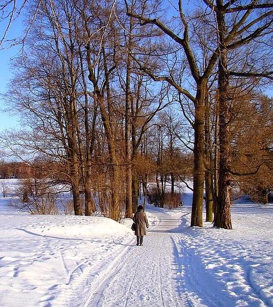Pretty winter day
