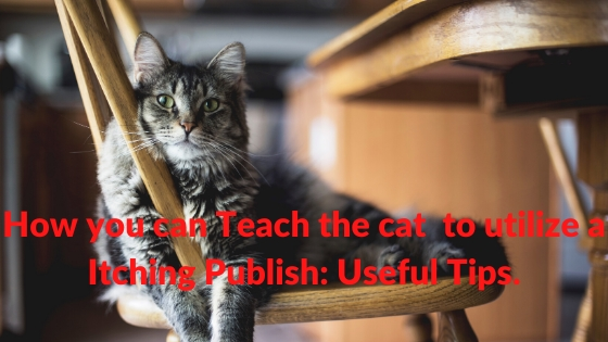 How you can Teach the cat  to utilize a Itching Publish: Useful Tips.