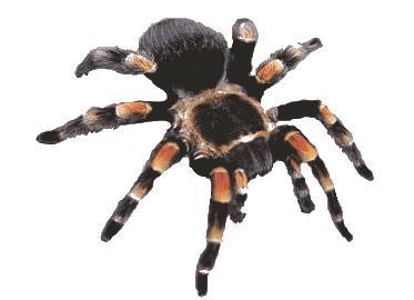 Ursus maritimus - Wikipedia, la enciclopedia libre