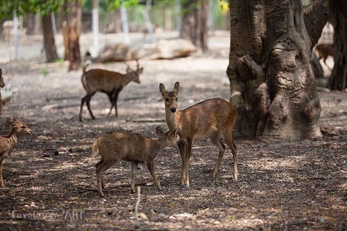 Маленькие олени в парке