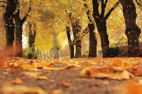picture of autumn leaves