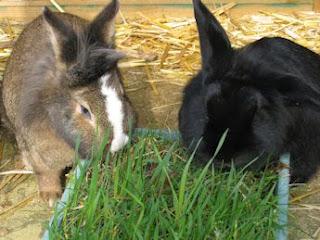Setiap makhluk hidup niscaya membutuhkan makan Jenis & Makanan Kelinci Terbaik