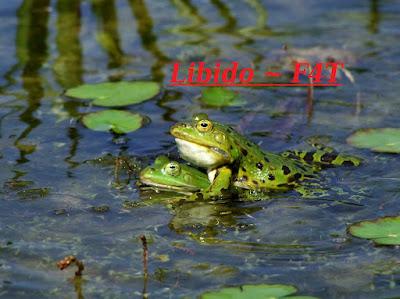 libido frogs