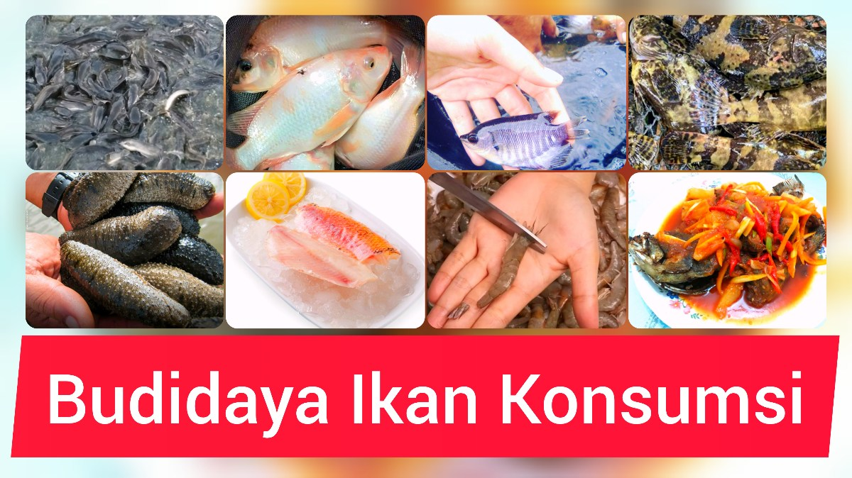 Peluang Usaha Budidaya Ikan Konsumsi Budidaya Ikan
