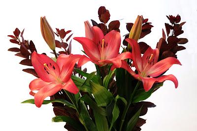 cotinus bouquet lilies