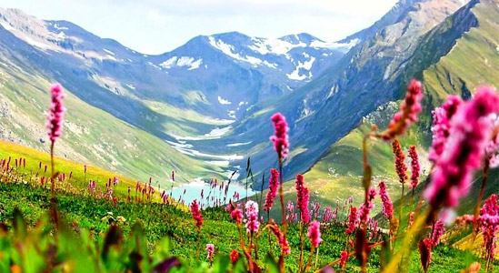Destination ; Valley of Flowers National Park