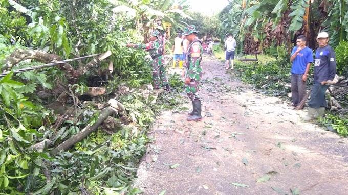 Plh Danramil Ilung dan Anggota Gotong Royong Bersihkan Pohon Tumbang