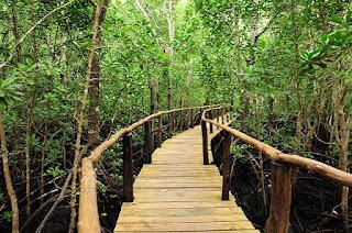 forest Zanzibar Honeymoon