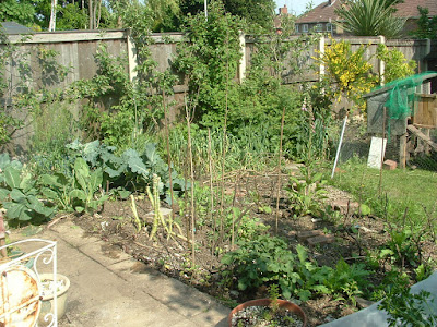 A small vegetable patch with various plants growing, and fan trained trees at the fence in back