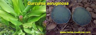 Herbalife use  Curcuma aeruginosa Roxb
