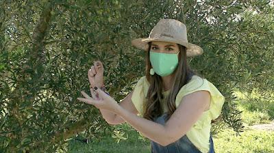Apresentadora visita cultivo de oliveiras – (Foto: Divulgação/SBT)