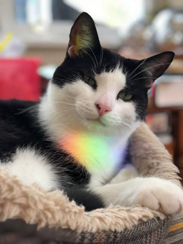 Rainbow cat prepared a new quest for you..