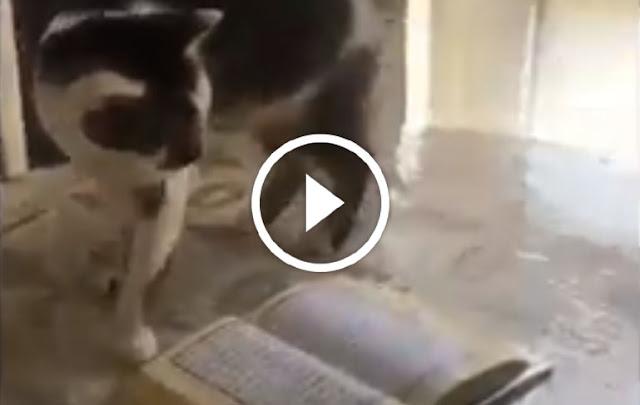 VIRAL! Subhanallah.. Lihat Perilaku Kucing saat Dipancing Makanan Dekat Alquran