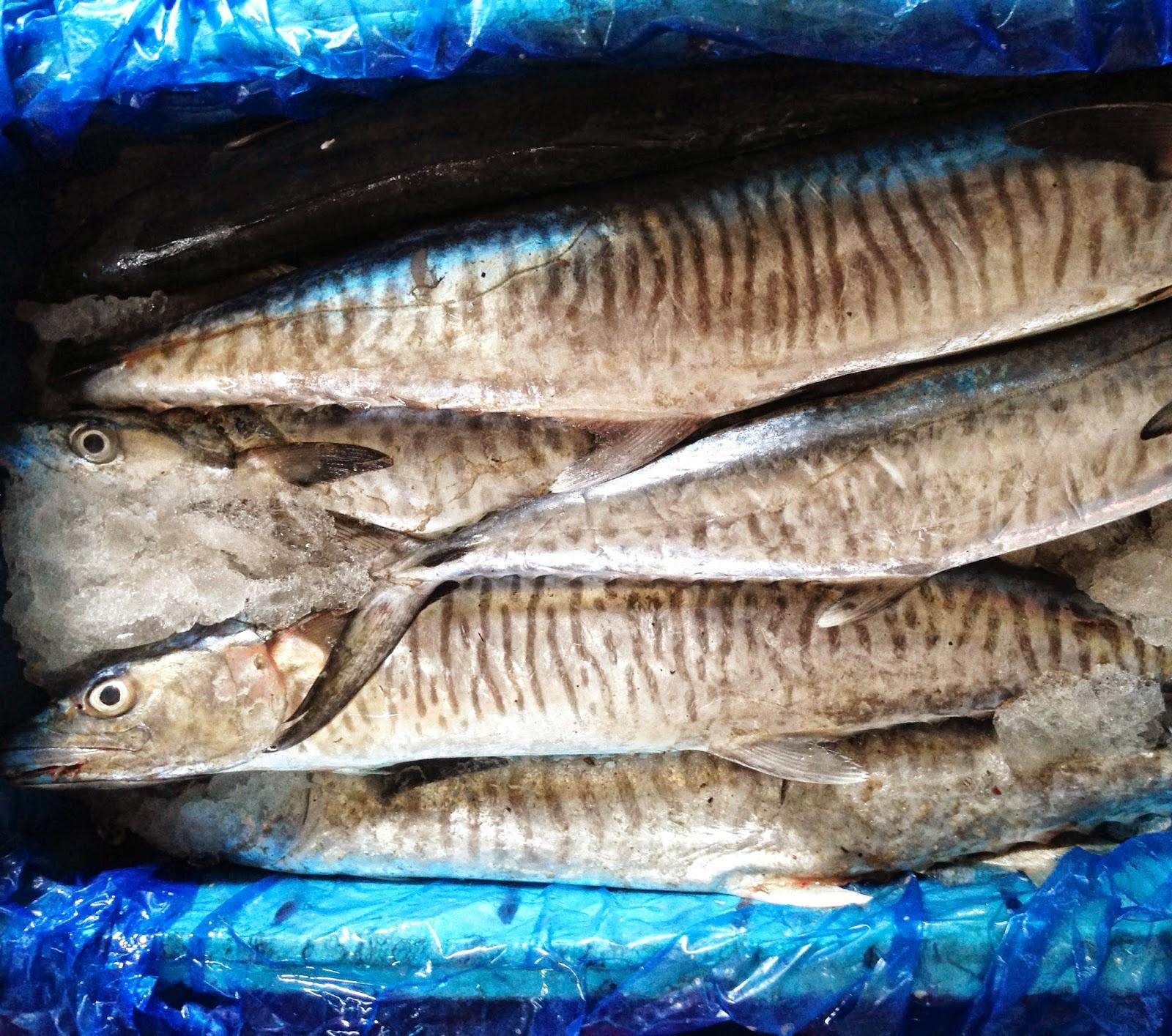 hasil tangkapan nelayan