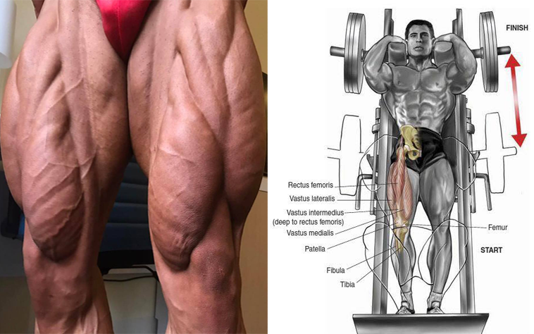 Wheels Of Steel: How To Develop Muscular Legs | Strong Muscle