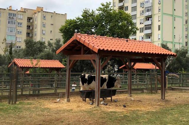 Quinta Pedagógica dos Olivais