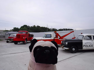 "a plush pug appears in front of 4 antique cars. the nearest is a black and white car with the words ""Sioux City Police"" painted on the door."