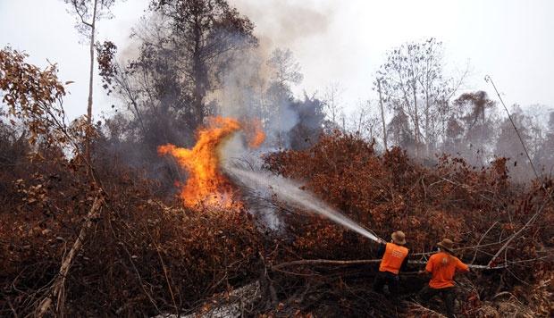Kebakaran Hutan Riau, Menhut: Titik Api Kita Kejar, Pembakarnya Harus Dihukum!
