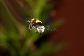 Η ικανότητα προσανατολισμού των μελισσιών