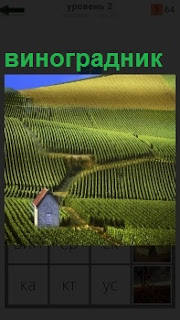 На всей местности размещен виноградник ровными рядами на холмах и низине