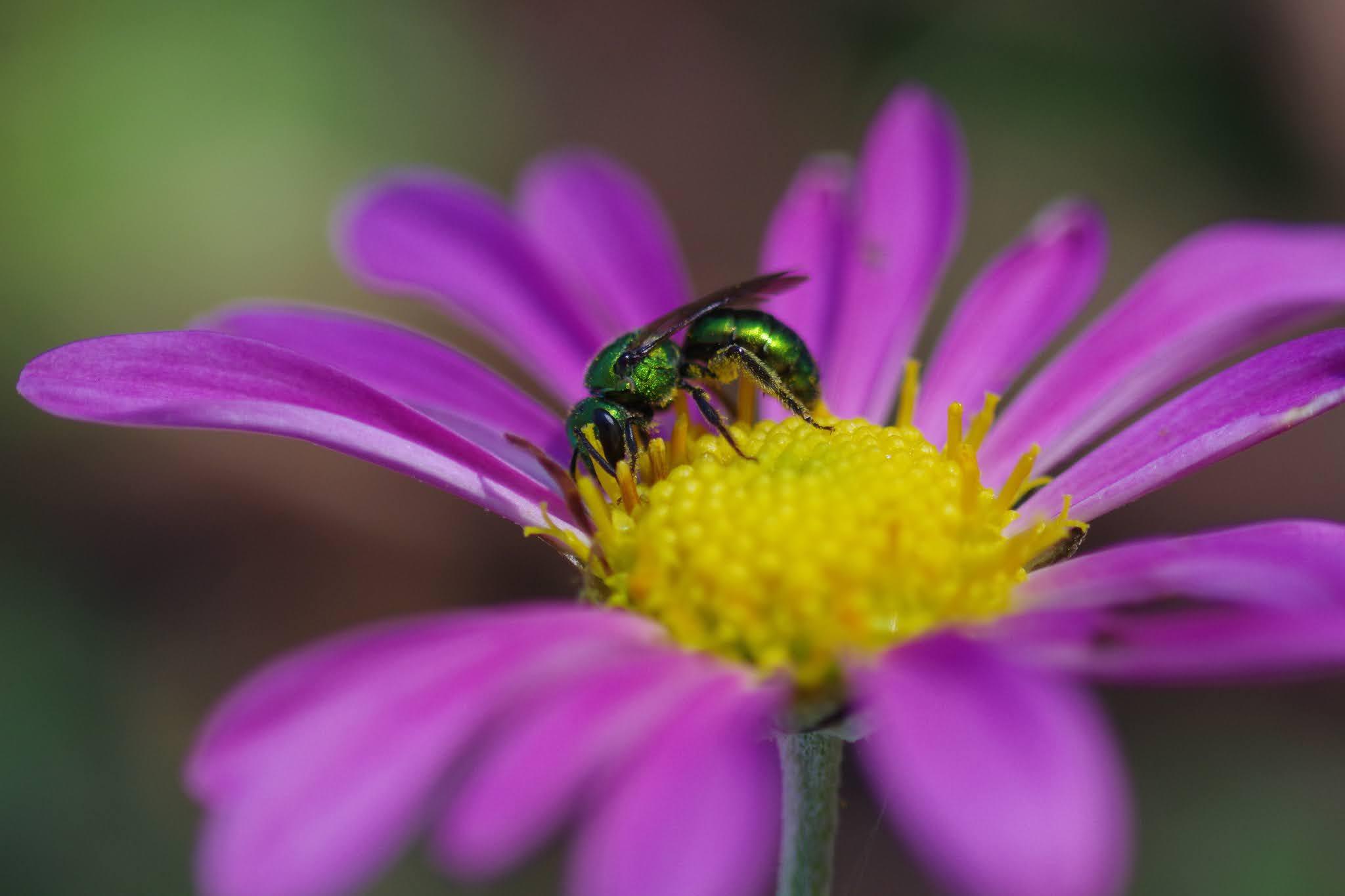 The Bugs in the Backyard