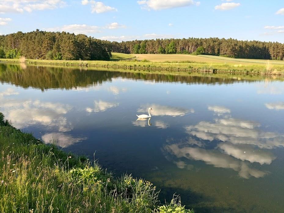 Лебедь, канал