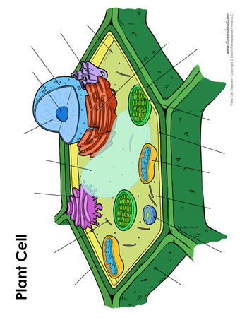 Tuesday September 26 Cells And Organelles