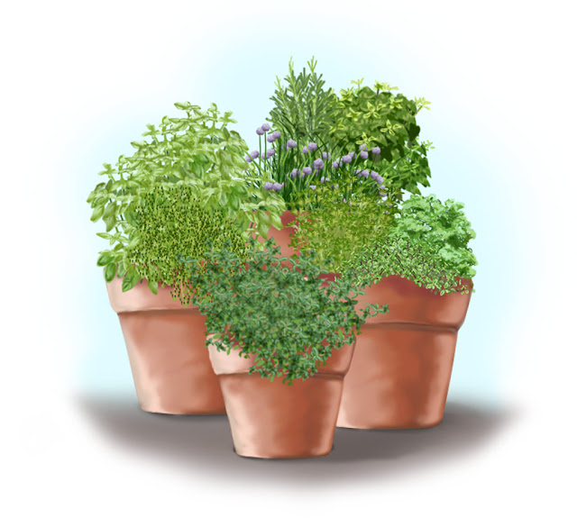 Bonnie Plants Herb Garden in containers