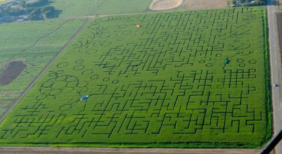 Inilah Labirin Terbesar di Dunia Yang Pecahkan Guinness Record