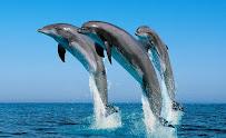 Дельфины выпрыгивающие из воды