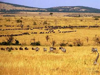 Pengertian Ekosistem, Komponen dan Macam-Macamnya