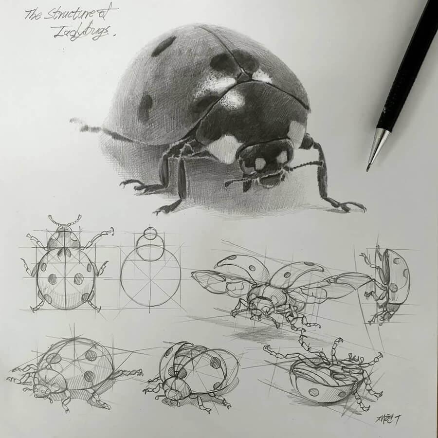 06-Ladybug-or-ladybird-Anjjaemi-www-designstack-co