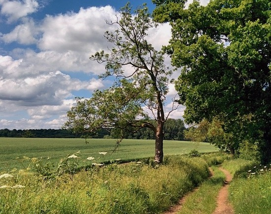 One of the footpaths covered by Hertfordshire Walker