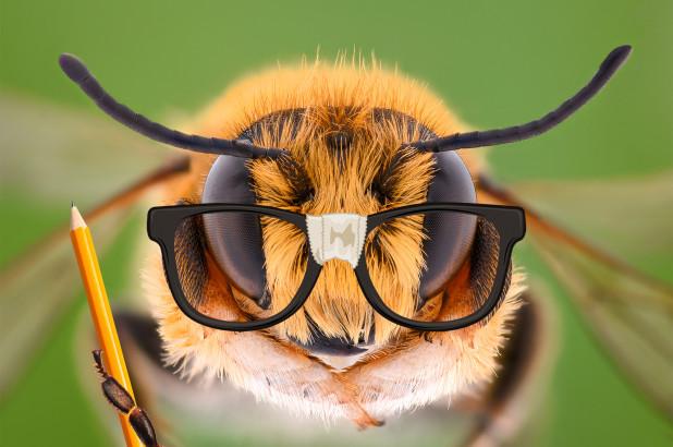 Ανακοίνωση από τον Σύλλογο Μελισσοκόμων και φίλων Μέλισσας Κορινθίας