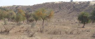 जैव विविधता का संरक्षण