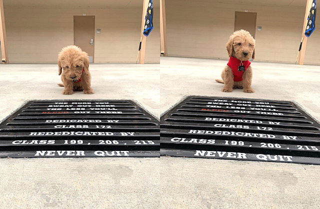 Golden-Doodle Pup Joins County Police Academy