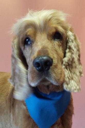 Mutleys Dog Grooming