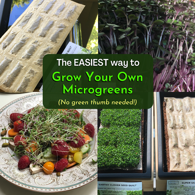 "Image: collage of Hamama microgreens photos with superimposed title, ""The EASIEST Way to Grow Your Own Microgreens"""