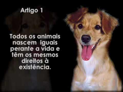 todos os animais têm direito à existência