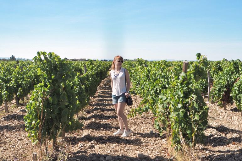 Séjour dans les vignes de Vacqueyras