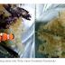 PAGE 2 Ini Dia Rempeyek Ikan Cupang yang Sedang Viral di Facebook