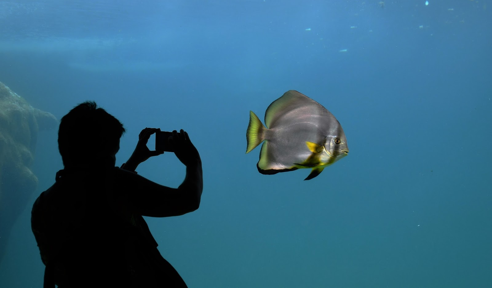 A man taking a photo of a fish in an aquarium.