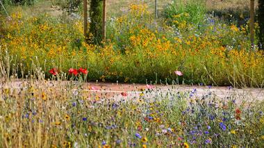 Una pradera muy florida y urbana